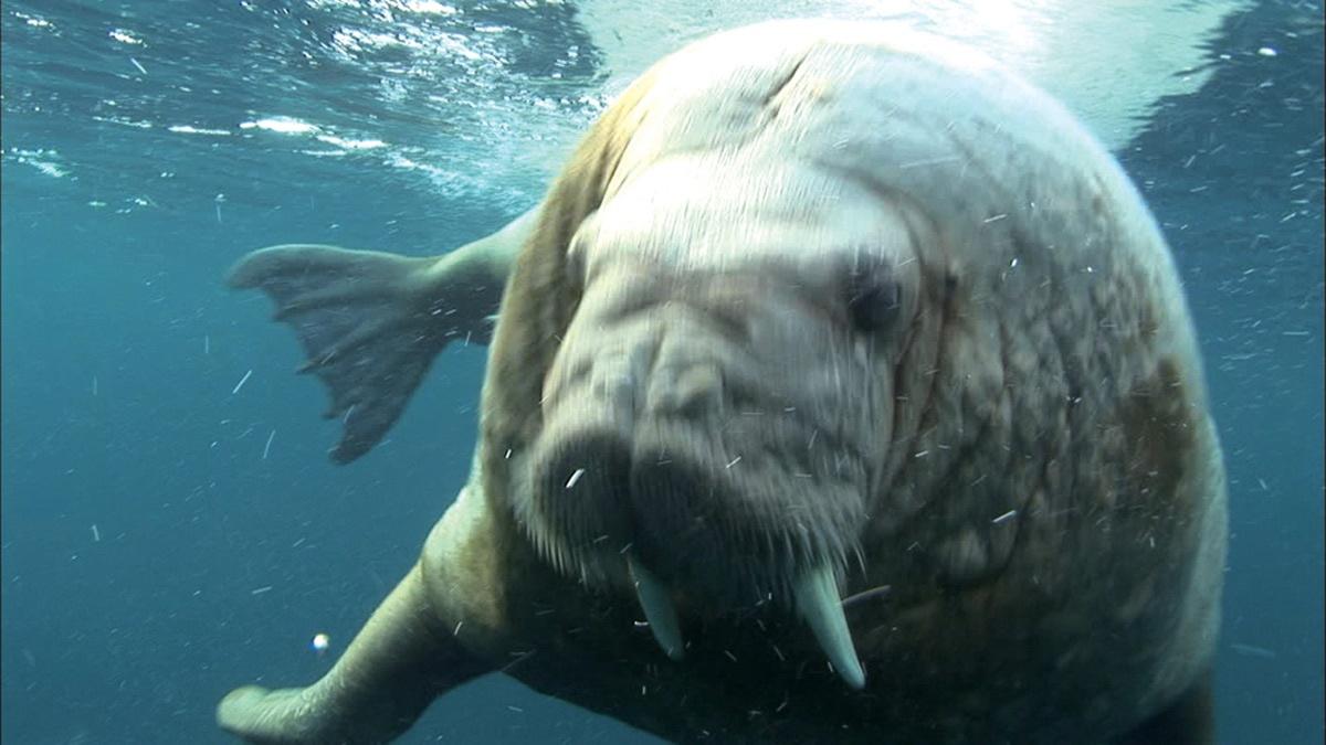 壁纸 动物 海洋动物 桌面 1200_675