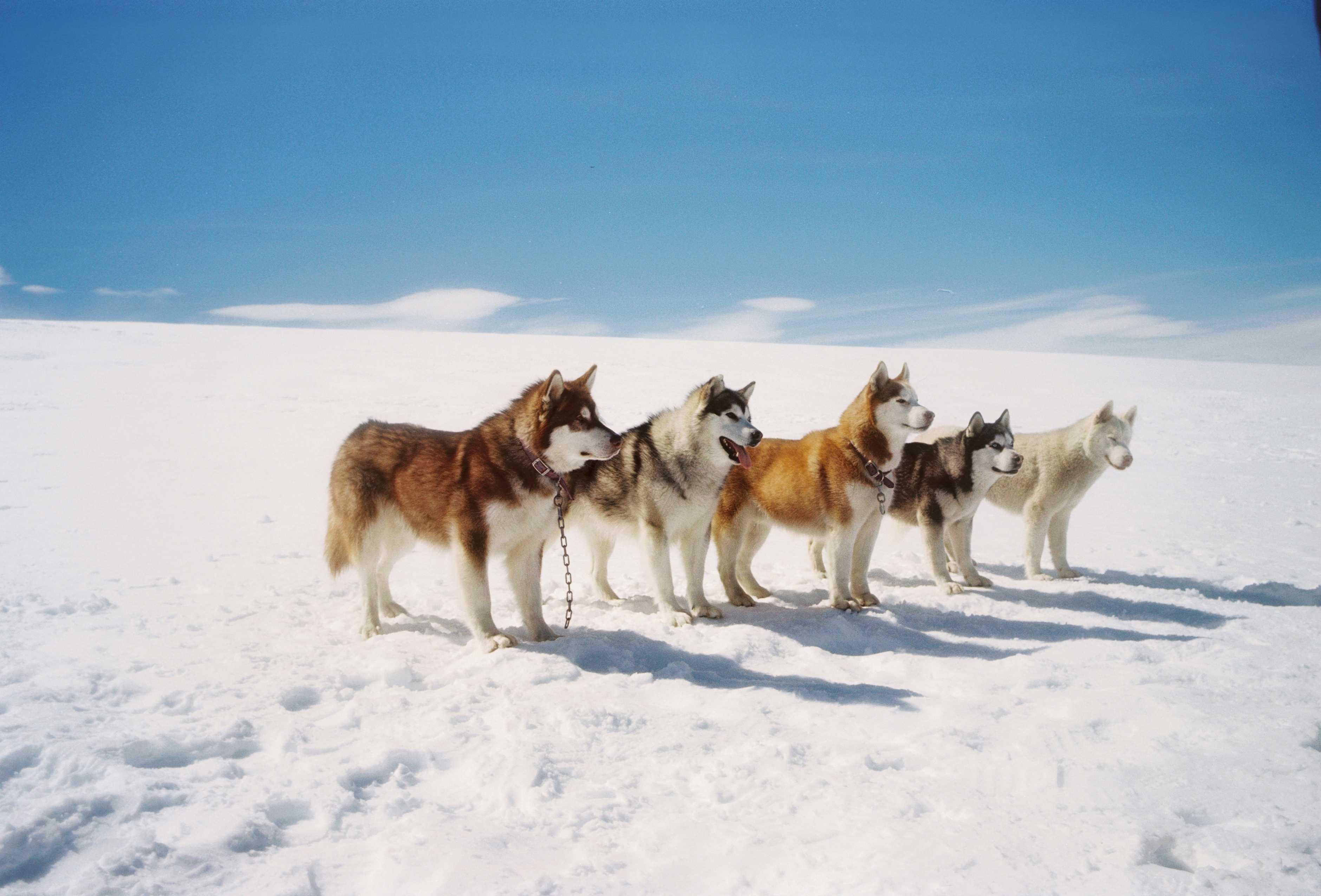 南极动物有哪些图片