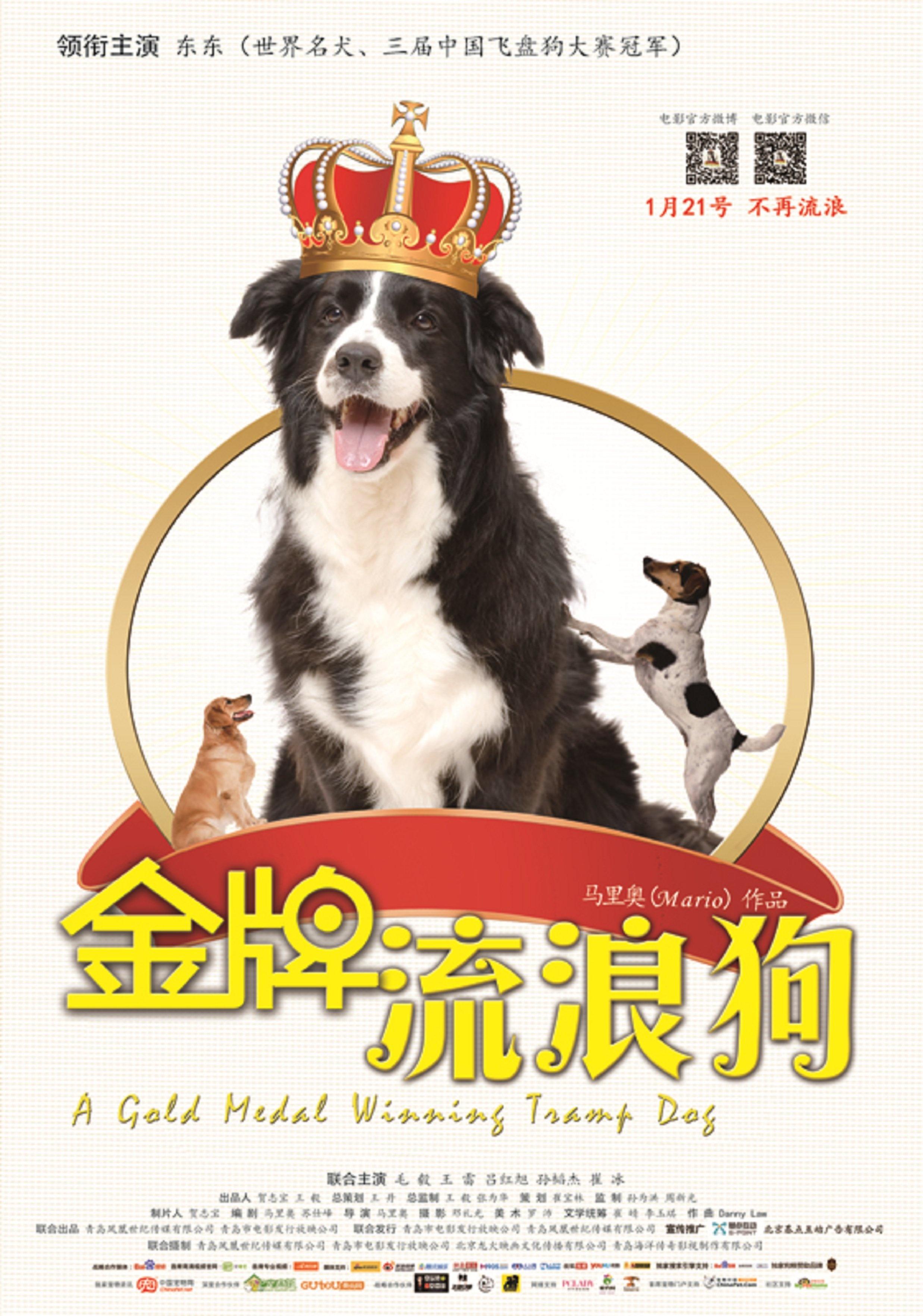 流浪动物宣传海报
