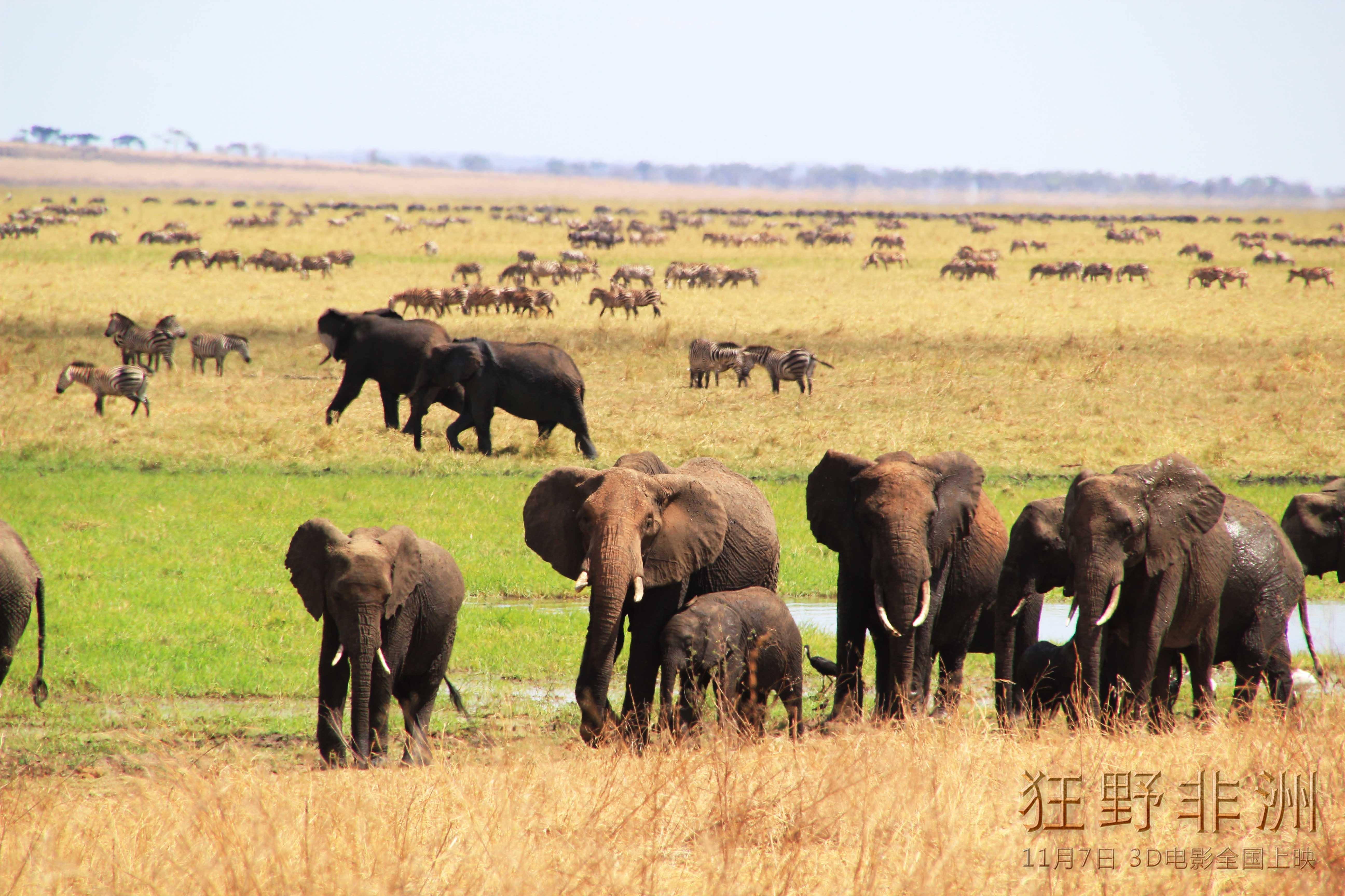 有关非洲动物的电影