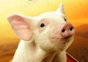 《夏洛特的网》:精灵猪小弟显神通