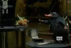 由华纳兄弟电影公司出品、J.K.罗琳首任编剧的3D魔幻巨制《神奇动物在哪里》已于11月25日以3D、IMAX3D、以及中国巨幕3D格式登陆内地银幕。影片开画24小时累积票房破亿、打破《哈利·波特》系列在内地开画成绩纪录;上映三天持续锁定30%以上的排片占比,上映四天破三亿,成为当周票房冠军,带热大盘堪称救市之作。