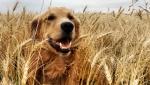 《一条狗的使命》终极预告