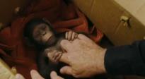 《猩球崛起3》电视宣传片 人猿和平不复存在