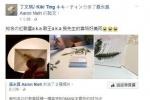 """林宥嘉丁文琪喜帖曝光 森林风被赞""""格外浪漫"""""""