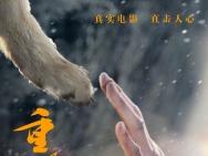"""赵忠祥助阵《重返·狼群》 痛斥盗版为""""狼""""正名"""