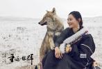 """动物题材优乐国际《重返·狼群》今日正式上映,片方发布了一支""""佟丽娅推荐版""""预告片。知名女演员佟丽娅为《重返·狼群》倾情献声,直言小狼格林颠覆了她对狼的一贯印象,""""狼妈""""李微漪救狼、训狼及帮助小狼重回草原的举动则不仅让她感受到责任感和信念的力量,更看到了女性非凡的毅力与果敢。"""