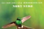 """《地球》新角色海报 """"蜂鸟大战蜜蜂""""片段曝光"""