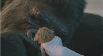 《金刚:骷髅岛》全新开启 让经典焕发出新活力