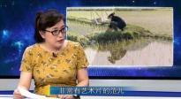 《十八洞村》有艺术片范 网友赞其湘西版路边野餐