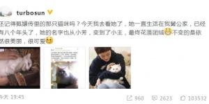 孙俪微博晒撸猫照 8年前曾和它共演《甄嬛传》
