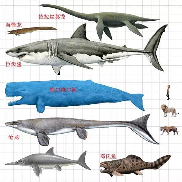 巨齿鲨 图片