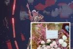 凯蒂·佩里台湾开唱 周杰伦昆凌夫妇联手送花篮