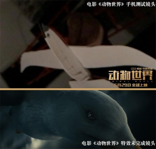 电影《动物世界》片头测试实拍对比图-海鸥