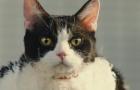《旅猫日记》预告片2