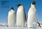 """2018年《帝企鹅日记2:召唤》再度来袭,正式定档10月12日在中国大陆上映,同时影片还曝光了定档海报及预告,萌萌的小企鹅们将如何面对""""成长的烦恼""""令观众充满了好奇与期待。"""