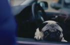《我的冤家是条狗》预告片
