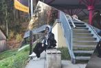 10月24日,配音演员边江的女友徐然通过微博,晒出一组定位奥地利的游玩风景照,不少网友猜测这就是唐嫣罗晋婚礼举行场地。