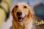 《忠犬大营救》11.23上映 狗狗题材聚焦社会热点