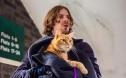 软萌可爱的猫咪在银幕上有几幅面孔呢?