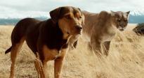 《一条狗的回家路》口碑特辑