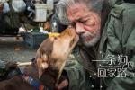 """《一条狗的回家路》被赞""""假期必看"""" 狗狗送温暖"""
