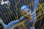 《白蛇:缘起》曝正片片段 青白蛇姐妹与道士斗法