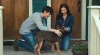"""《一條狗的回家路》""""家是歸途""""正片片段 為何回家引網友熱議"""