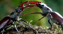 放大了无数倍的昆虫世界是什么样子? 《微观世界》一探究竟