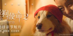 爱唠叨但也爱你!《一条狗的使命2》曝母亲节视频