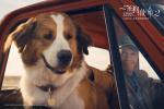 《一条狗的使命2》热映中 用爱治愈每个孤单的人