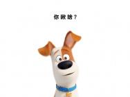 《爱宠大机密2》发布角色海报 萌宠集结办派对