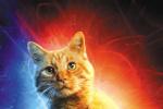 橘猫古斯:看完《惊奇队长》观众一定会议论它!