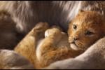 """不是""""真狮版""""!《狮子王》只有一个镜头是实拍"""