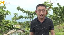 《村里的喜事》:车厘子越卖越好!云阳县双平村村民带你逛果园