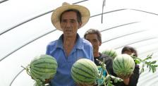 《村里的喜事》:隔屏感受摘西瓜的喜悦!