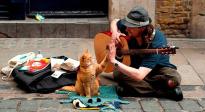 《流浪猫鲍勃2:鲍勃的礼物》:最好的礼物是爱
